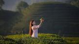 魅力雅安,中国茶都名山之美!