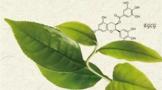 茶多酚的特性及其在食品中的应用
