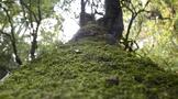 拉佤布傣茶业:茶人,给了茶树第二次生命
