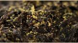 六堡茶的金花是什么