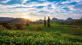 """积庆里红茶谷被认定为""""清远农业公园"""""""
