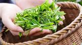 江苏泰州成立茶叶行业协会