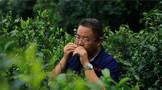 """喜报! 热烈祝贺中吉号被评为""""深圳市重点农业龙头企业"""""""