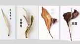 揭秘福建白茶过去的辉煌史