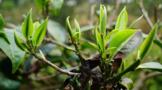 茶行业农业产业化国家重点龙头企业大盘点