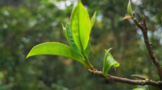 【2020年度新闻】茶行业热点新闻事件汇总(下)