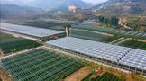 浙大屠幼英教授:茶的综合利用产业现状与未来