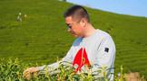 【国茶工匠·人物推选】制茶大师葛联敏:创新改良技艺 热心责任担当