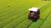日本茶业的全产业链机械化状况
