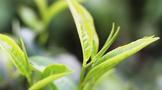 2020年香港茶叶贸易供给关系报告