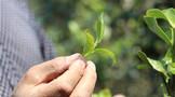 寻找盈利的向上力量:重新发现与提炼茶叶终端店盈利机制