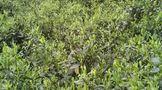 雅安市雨曦农业发展有限公司茶叶种植基地