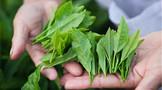 """""""十四五""""时期,茶产业发展将有哪些新看点"""