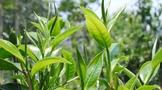 桃花酿酒、春水煎茶,云源号与您相约暖春季!