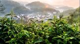 中国原生态最美山乡,天方硒茶产自这里
