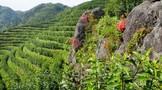 不同保鲜方法对低温贮藏烘青绿茶品质的影响