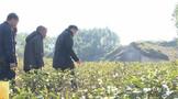 惠州多祝百户田村:村民纷纷返乡种茶 守好绿水青山
