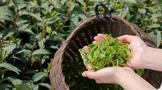 2021年茶业发展6大趋势,看这些数据!