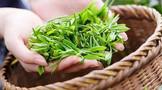 环球观茶 | 印度阿萨姆邦茶叶工作者最低日薪提高30%