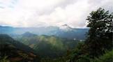 云南茶山:高山云雾出好茶,无量山茶山无量