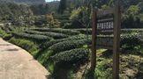 科技特派员廖红:探索生态茶园新路径,让特色更特,优势更优