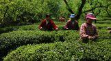 茶人茶事: 不能忘却的民国茶界泰斗陆溁