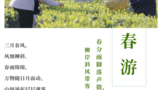 萧氏茶业茶园:春日茶山吐新绿,茶旅活动掀热潮!