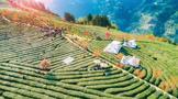 紫阳县富硒茶产业示范园区观光,不变的紫阳茶香