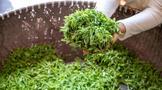 龙井茶新茶怎样存储锁鲜效果更好?
