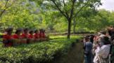 """茶旅融合,带动""""滇红第一村""""一年增收800万元"""