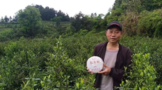 散茶变茶饼 茶产业已成为贵州大坪村致富产业