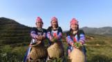 塔山乡力发展高品质茶产业