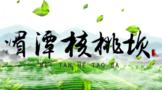 贵州十佳最美茶山:湄潭核桃坝村