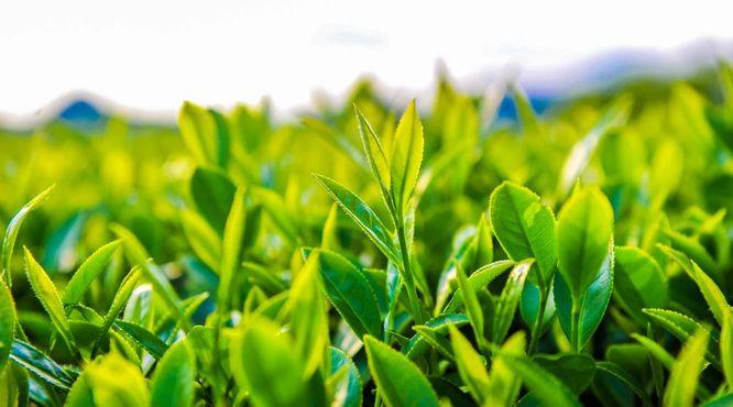5升8降!2021中国区域品牌价值(茶叶类)排名变化一览