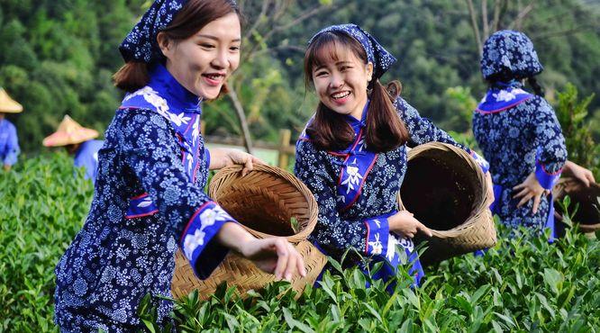 产业扶贫,我国贫困地区茶产业发展面临的问题与挑战
