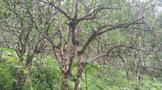 倚邦大黑树林:有多诗意,就有多孤寂