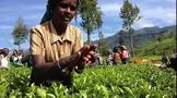 中国茶对外的陆路传播