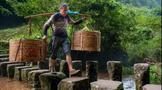 天价茶整治后,武夷岩茶市场如何?