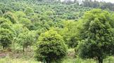 凤冈:在提升绿水青山颜值中做大金山银山价值