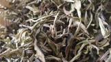 云南白茶发展中需要回答的几个问题?