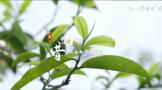 Wei xin jie tu 20210617134543