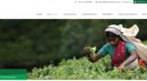 斯里兰卡茶产量截至5月创新高,但行业担心化肥危机导致未来产量减少