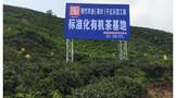 雅安茶厂:神农示茶