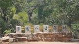 什么是景迈香?仿佛遇见那千年古寨万亩茶林的独特韵味!