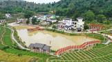苍梧县六堡镇大中村:茶山唱响致富梦