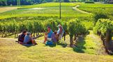 钟梅:我看法国葡萄酒庄园经济与普洱茶