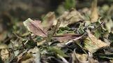 """茶叶及相关制品保质期团标发布,""""过期茶""""还能不能喝?"""