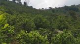 临翔区积极推动茶产业发展