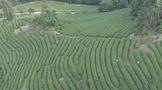 推进生态茶园建设●!武夷山走茶产业可持续发展道路