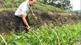 江门鹤山:退役军人回乡创办茶苗培育基地 助力茶产业发展